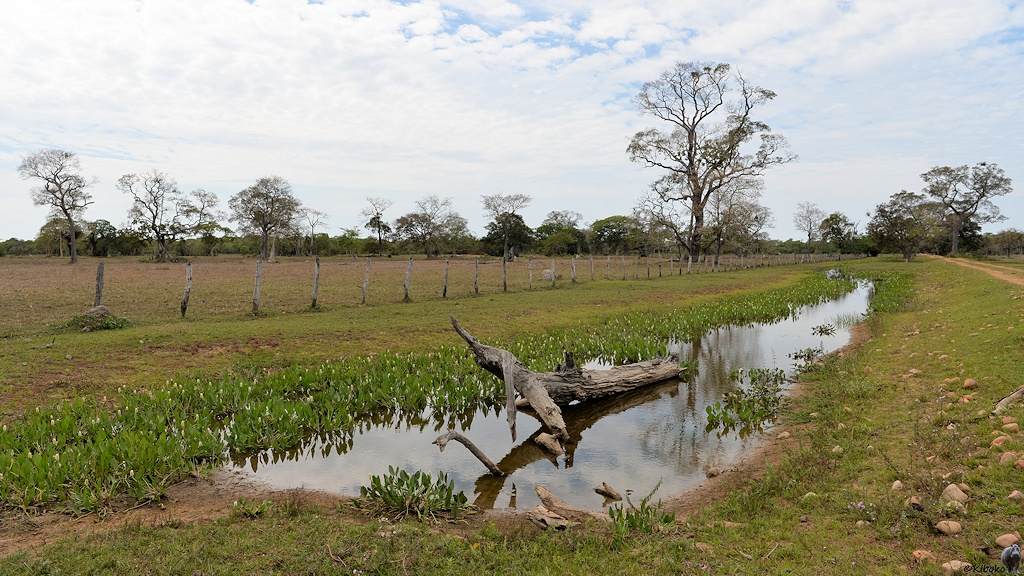 Landschaftsaufnahme mit wassergefülltem Graben